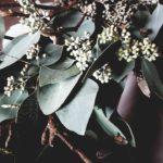 Close-up foto van een bloemstyling toef door Antérieur Authentique