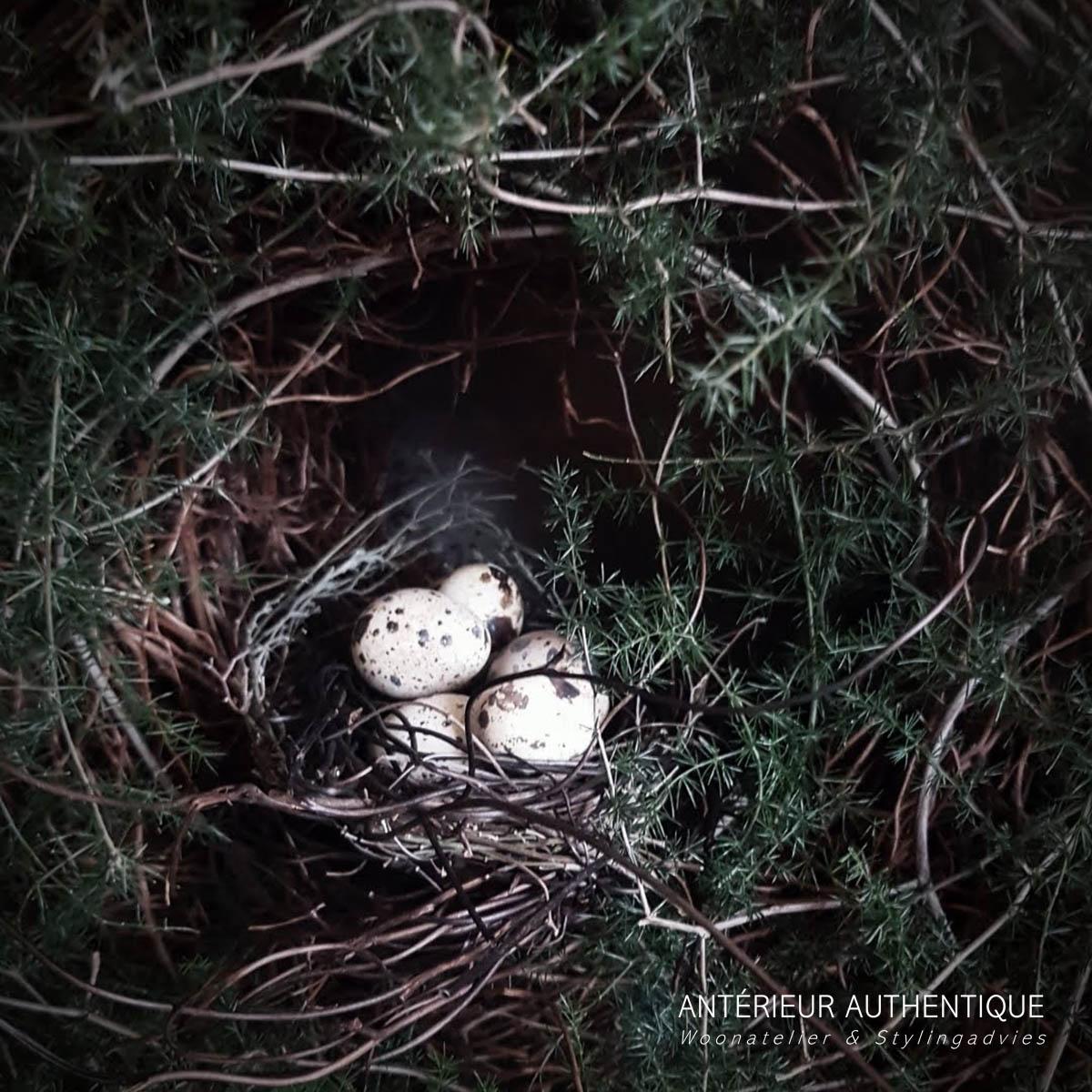 Afbeelding van vogelnestje in krans wilde asparagus voor gebruik in webshop van Antérieur Authentique