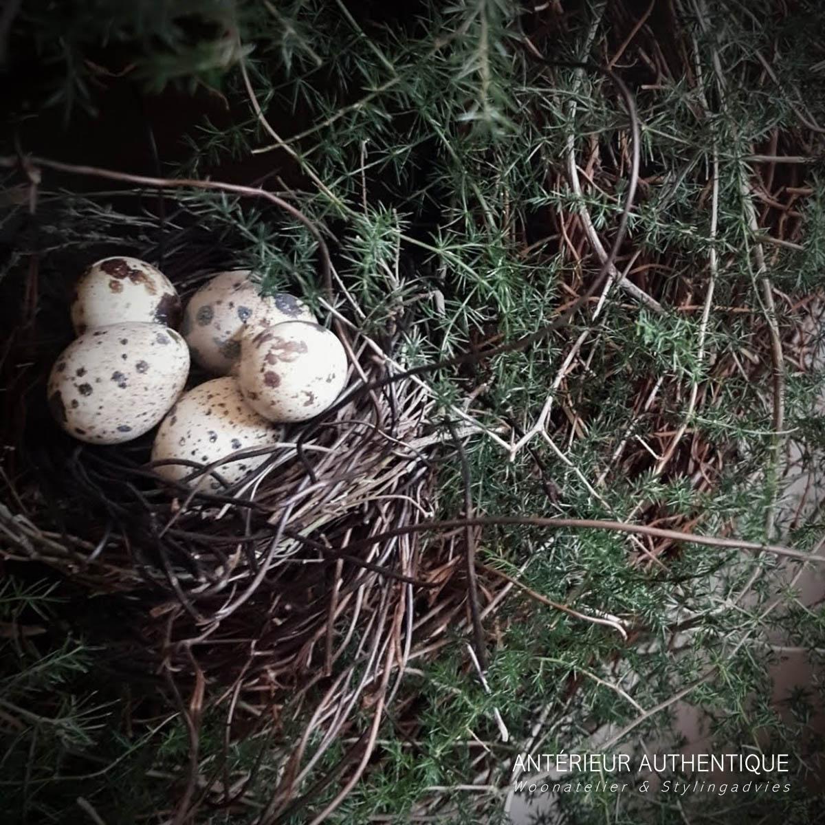 Close-up afbeelding van vogelnestje in krans wilde asparagus voor gebruik in webshop van Antérieur Authentique